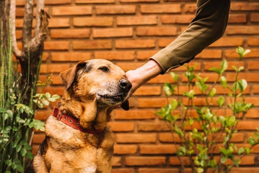 Guia da boa vizinhança: regra de convívio com os pets